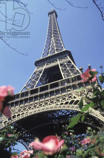 France, Paris.  Eiffel Tower And Flowers In Foreground