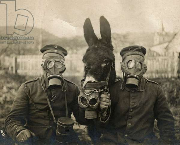 German Soldiers and Donkey wearing gas masks, 1915