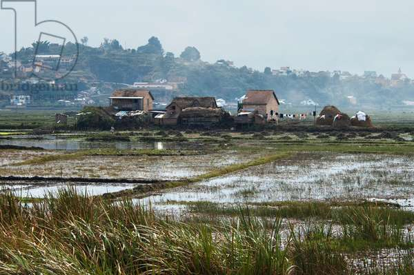 Rice Fields Near Antananarivo, Madagascar (photo)