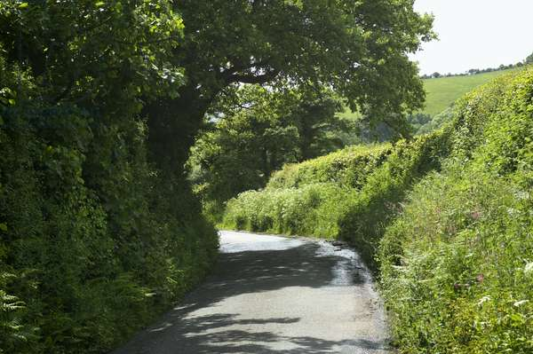 Great Britain, England, Devon, narrow country lane near Teignmouth