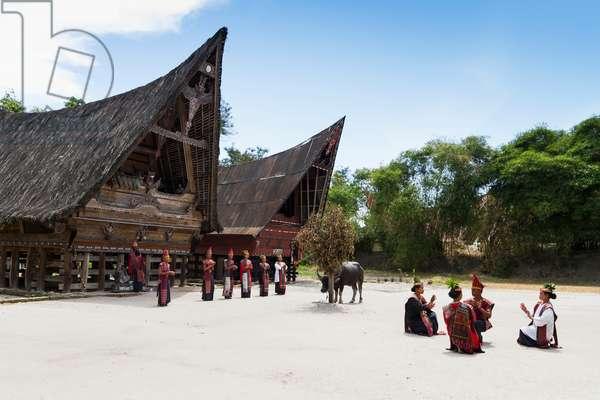 Toba Batak people performing a traditional Batak dance and water buffalo at Huta Bolon Museum in Simanindo village on Samosir Island, Lake Toba, North Sumatra, Indonesia (photo)