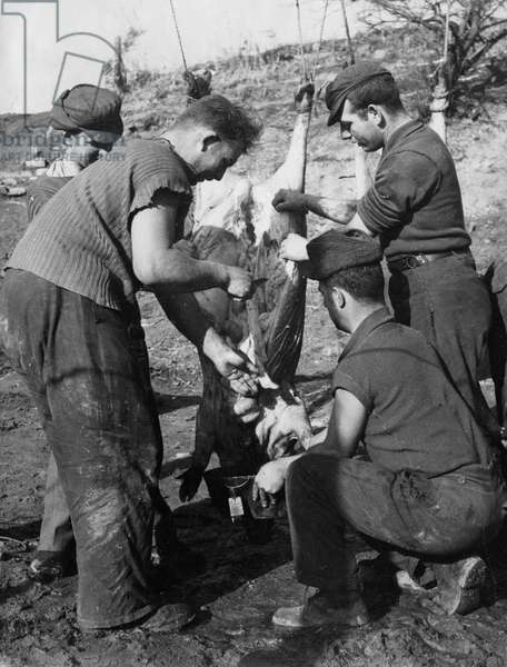 Korean War. POW's on mess duty in a POW camp in North Korea prepare a whole pig for the camp dinner.