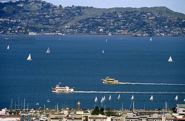 Bay in Summer, San Francisco (photo)