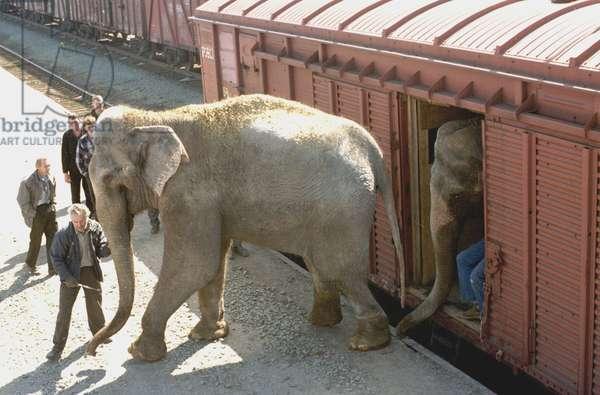 Elephants On The Railroad Station