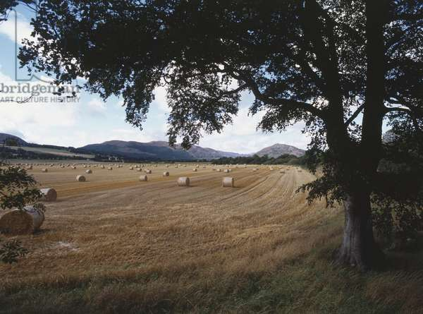 Great Britain, Scotland, bails of barley in harvested field on Scottish isle.