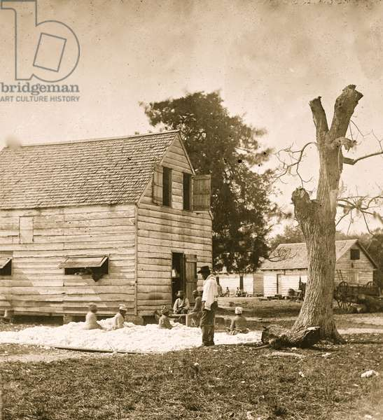 African Americans preparing cotton for the gin on Smith's plantation 1862 (photo)
