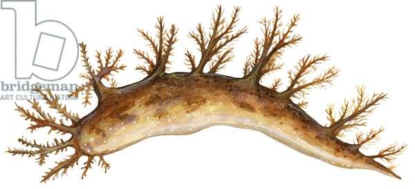 Nudibranche, limace de mer - Sea slug (order Nudibranchia) ©Encyclopaedia Britannica/UIG/Leemage