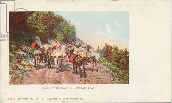 Burro Pack Train on Mountain Road