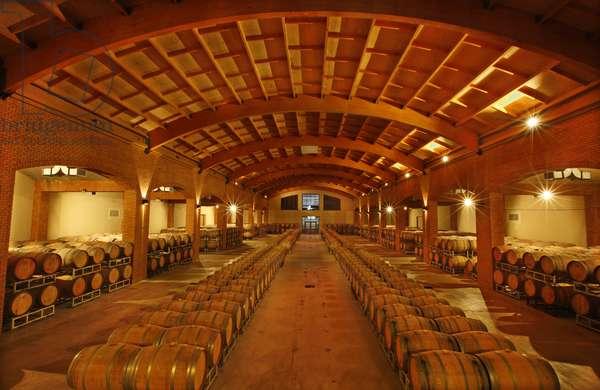 Wine Barrels, Santa Helena Vineyards, Chile (photo)
