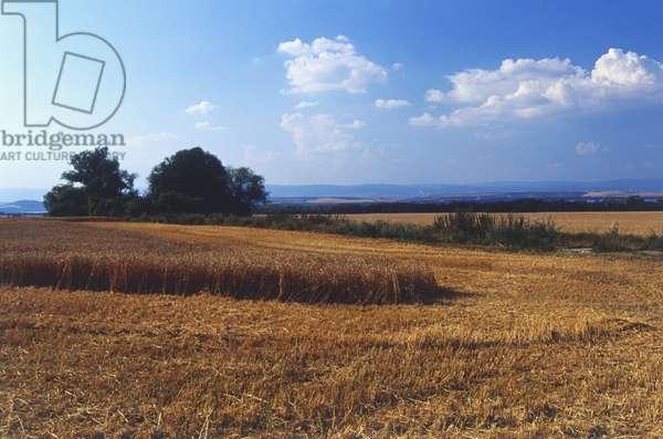 Europe, Czech Republic, North Bohemia, farmland between Kadan and  Zatec