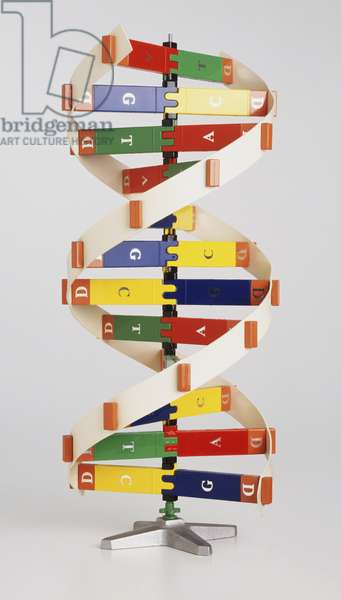Simplified colourful model of DNA structure, front view.