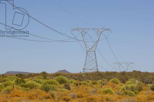 Powerlines (photo)