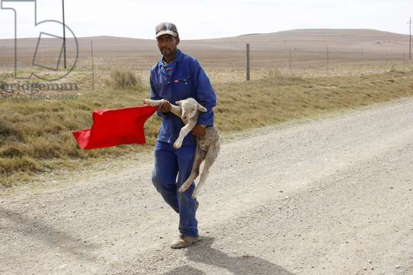 Shepherd with lamb, Western Cape, South Africa (photo)