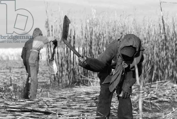 Two children working at a sugarcane plot, in Ahualulco, Jalisco, Mexico. March 31, 2007.  (photo)