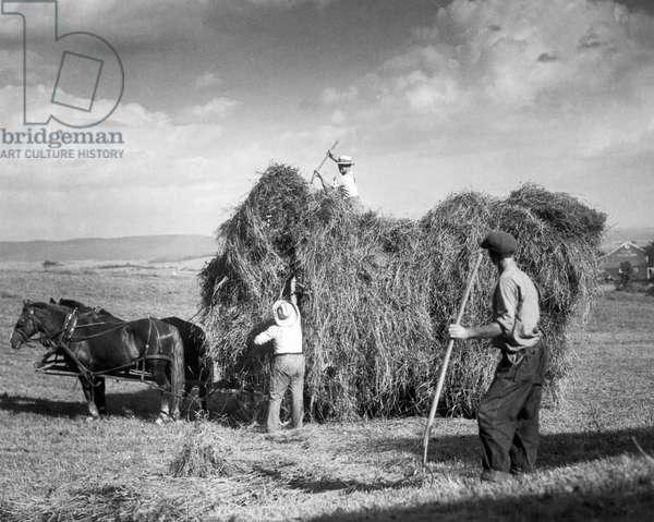 Harvesting Hay, c.1922 (b/w photo)