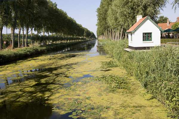 Belgium, Damme, aquatic weed on surface of treelined canal