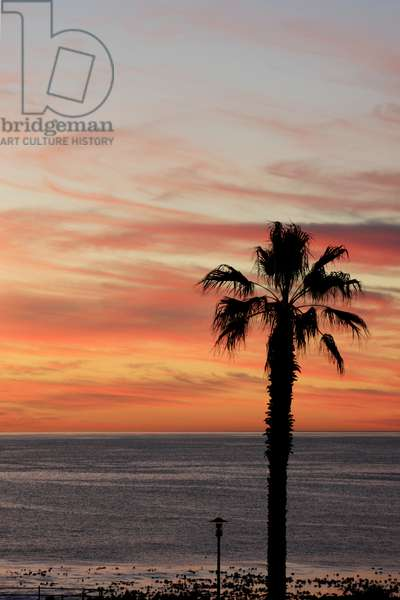 Sunset with Pam Tree (photo)