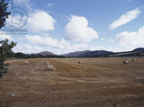 Great Britain, Scotland, Black Isle, bails of barley in harvested field bordered by mountain landscape.