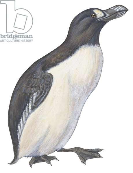 Grand Pingouin - Great auk (Pinguinnus impennis) ©Encyclopaedia Britannica/UIG/Leemage