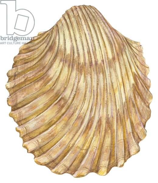 Bucarde - Cockleshell (Trachycardium muricatum) ©Encyclopaedia Britannica/UIG/Leemage