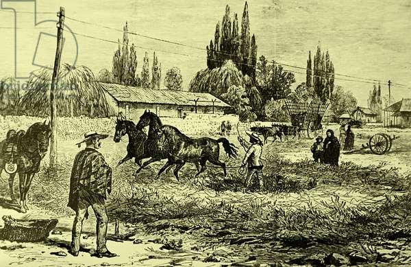 Threshing with horses