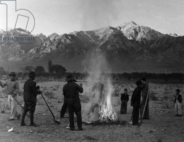 Burning leaves, autumn dawn, Manzanar Japanese American Internment Camp, California, 1943 (b/w photo)