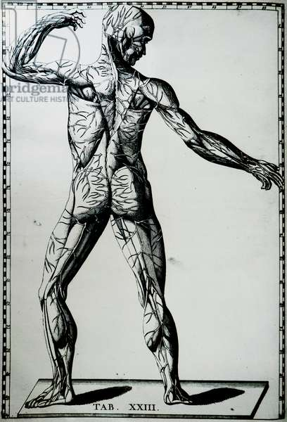 A human nervous system.