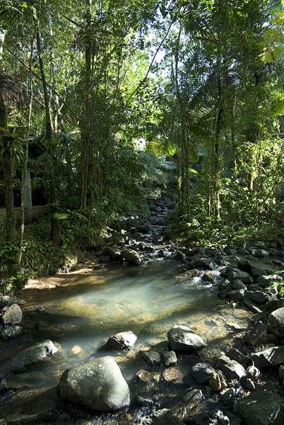 Puerto Rico, El Yunque Rainforest, La Mina Trail, light falling through trees onto footpath