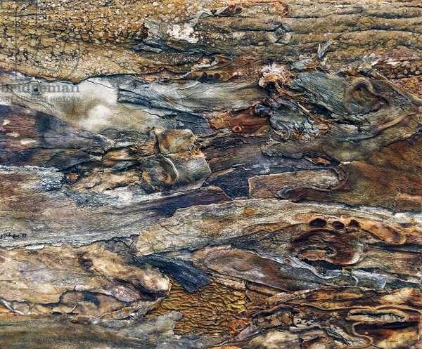 Chaussée boiseuse, 1959 (painting)