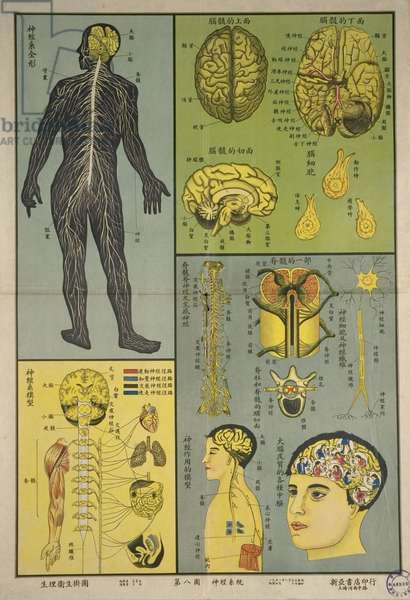 Anatomy of the nervous system and the functions of brain