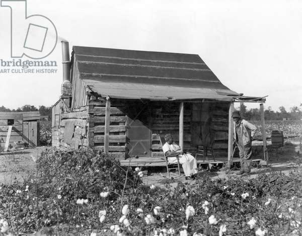 An old African American man and his wife at their cabin surrounded by cotton fields. They were formerly slaves, United States: c. 1895 (b/w photo)