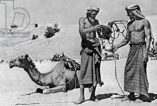 Bedouins In The Desert In Saudi Arabia