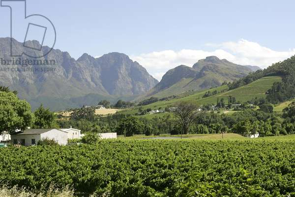 Franschhoek, South Africa, part of the famous South African Wine Route (photo)
