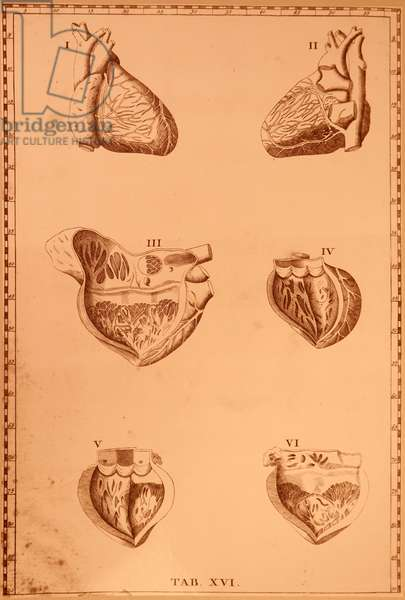 Different views of the human heart.