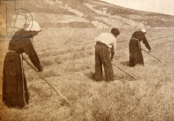 Monks tend to farming work during the Spanish Civil War