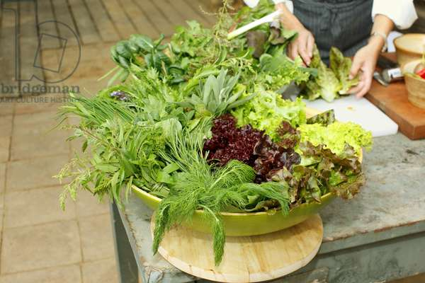 Fresh Herbs and Lettuce, Chile (photo)