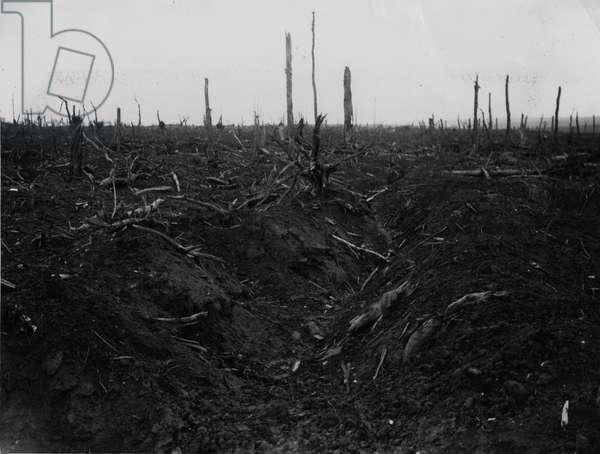 Battle of Delville Wood, 1916 (b/w photo)