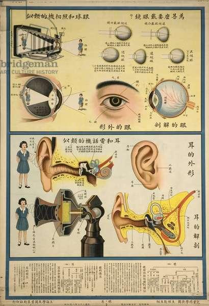 Anatomy Chart of the Eye - the Ear
