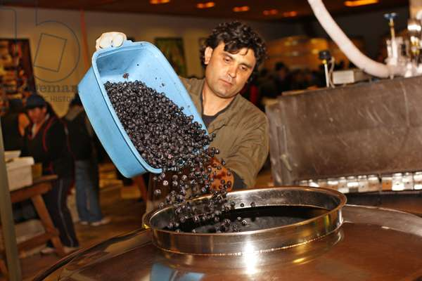 Pouring Grapes into Fermentation Tank, Chile (photo)