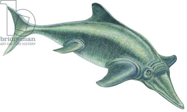 Ichthyosaure (reptile carnivore marin) - Ichthyosaur (Ichthyosaurus), ©Encyclopaedia Britannica/UIG/Leemage