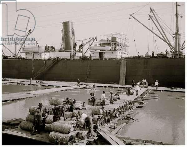 Steamer loading hides, New Orleans, La (b/w photo)