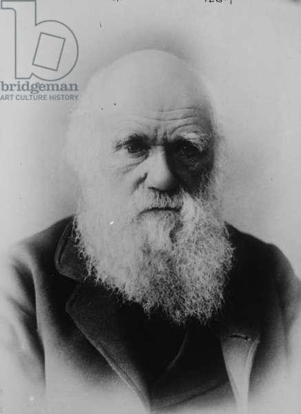 Portrait of Charles Darwin (photo)