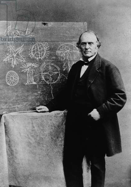 Louis Agassiz : Louis Agassiz, Swiss-born U.S. naturalist, geologist, and teacher who made revolutionary contributions to the study of natural science with landmark work on glacier activity and extinct fishes. He achieved lasting fame through his innovative teaching methods, which altered the character of natural science education in the United States ©Encyclopaedia Britannica/UIG/Leemage