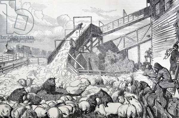 Pig Driving in Cincinnati, 1870