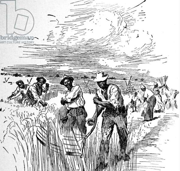 Agricultural slaves working in Virginia, 1788