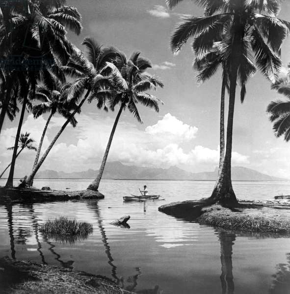Hawaii Tropical Scene, Hawaii, c.1940  (b/w photo)