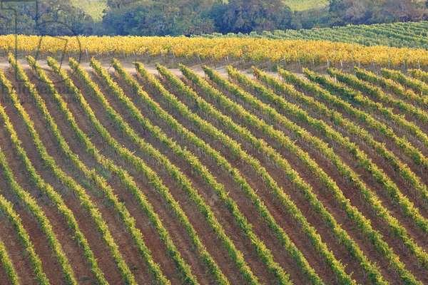 Matetic Vineyards, Chile (photo)