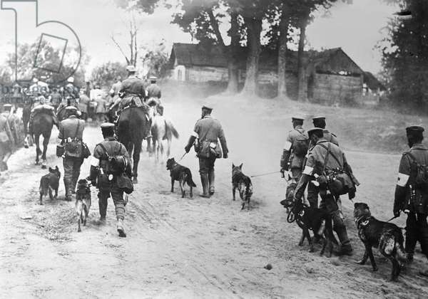 Red Cross Dogs to the Front (b/w photo)