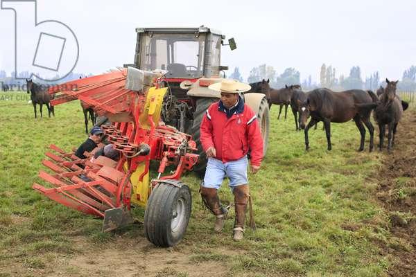 Huaso and Farm Plough (photo)