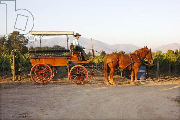 Horse Cart, Casa Silva Vineyard, Chile (photo)